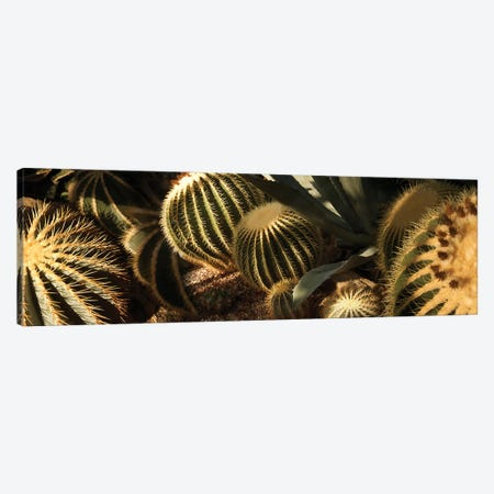 Close-Up Of Assorted Cactus Plants II 3-Piece Canvas #PIM14363} by Panoramic Images Canvas Artwork