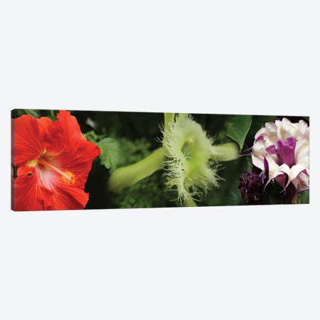 Close-Up Of Assorted Colorful Flowers Canvas Print #PIM14365} by Panoramic Images Canvas Print
