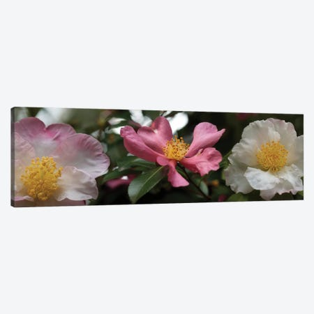 Close-Up Of Assorted Rhododendron Flowers I Canvas Print #PIM14373} by Panoramic Images Canvas Print