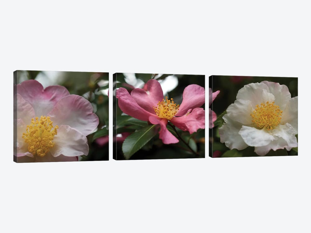 Close-Up Of Assorted Rhododendron Flowers I by Panoramic Images 3-piece Canvas Wall Art