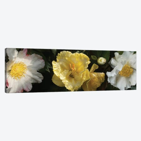 Close-Up Of Assorted Rhododendron Flowers IV Canvas Print #PIM14376} by Panoramic Images Canvas Art