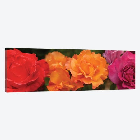 Close-Up Of Assorted Roses Canvas Print #PIM14377} by Panoramic Images Canvas Art