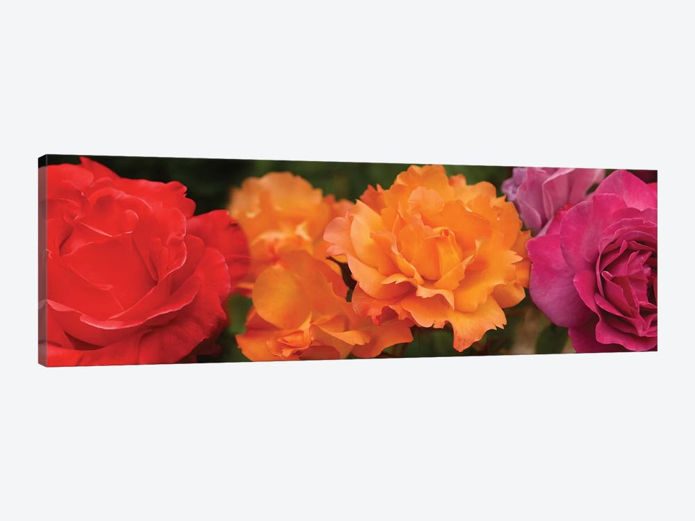 Close-Up Of Assorted Roses by Panoramic Images 1-piece Canvas Art
