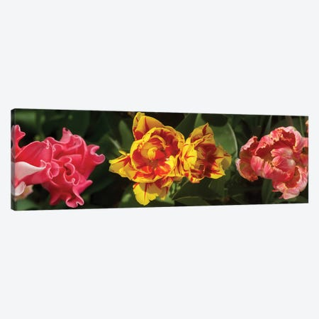 Close-Up Of Assorted Tulip Flowers Canvas Print #PIM14379} by Panoramic Images Art Print