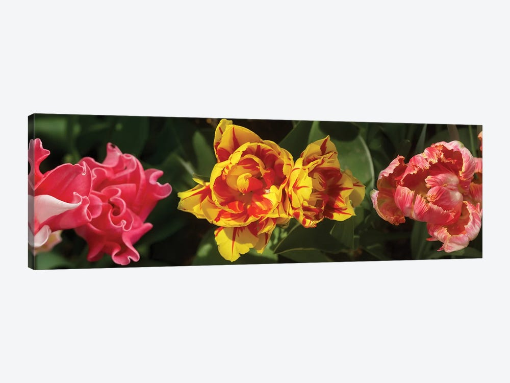 Close-Up Of Assorted Tulip Flowers by Panoramic Images 1-piece Canvas Artwork