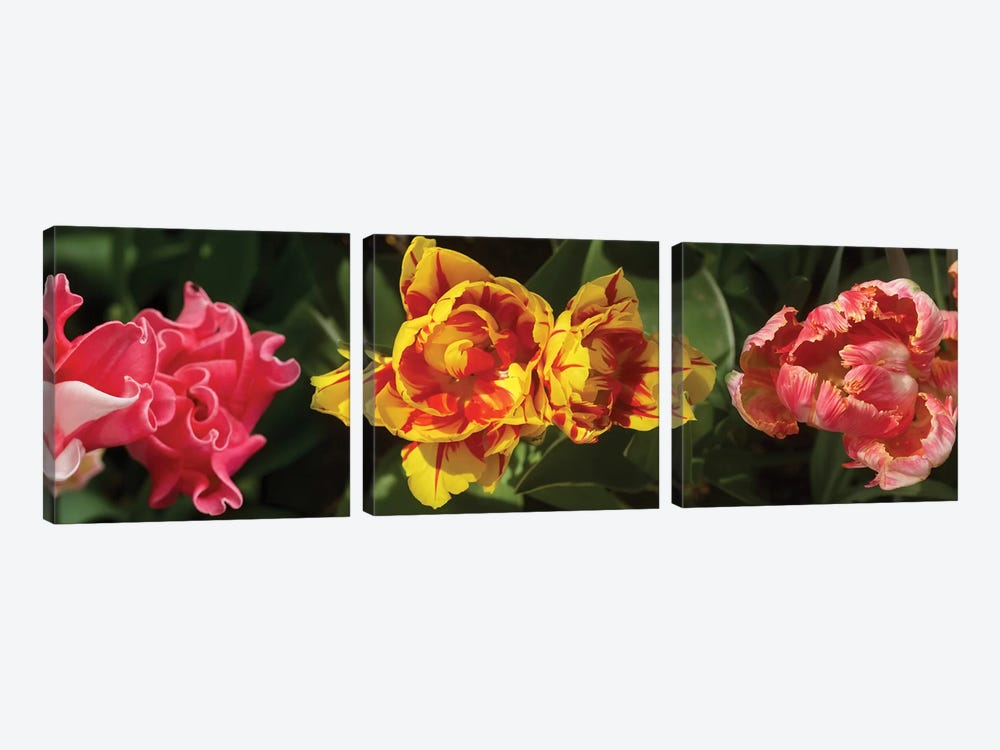 Close-Up Of Assorted Tulip Flowers by Panoramic Images 3-piece Canvas Art