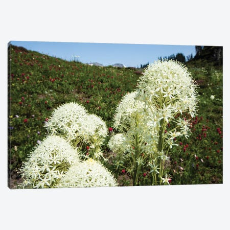 Close-Up Of Beargrass, Mount Rainier National Park, Washington State, USA Canvas Print #PIM14380} by Panoramic Images Canvas Artwork