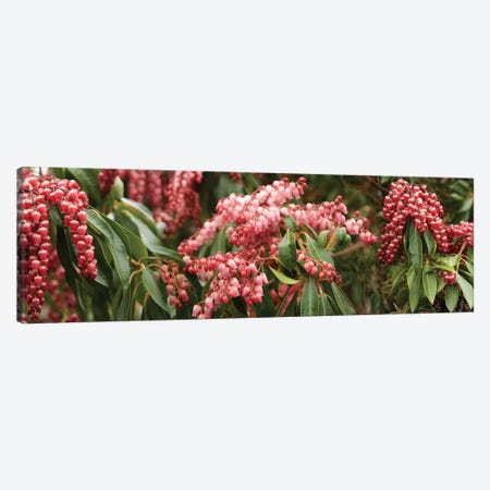 Close-Up Of Cascading Red Flowers Canvas Print #PIM14391} by Panoramic Images Canvas Art Print
