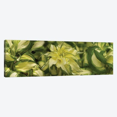 Close-Up Of Coleus Leaves Canvas Print #PIM14394} by Panoramic Images Canvas Artwork