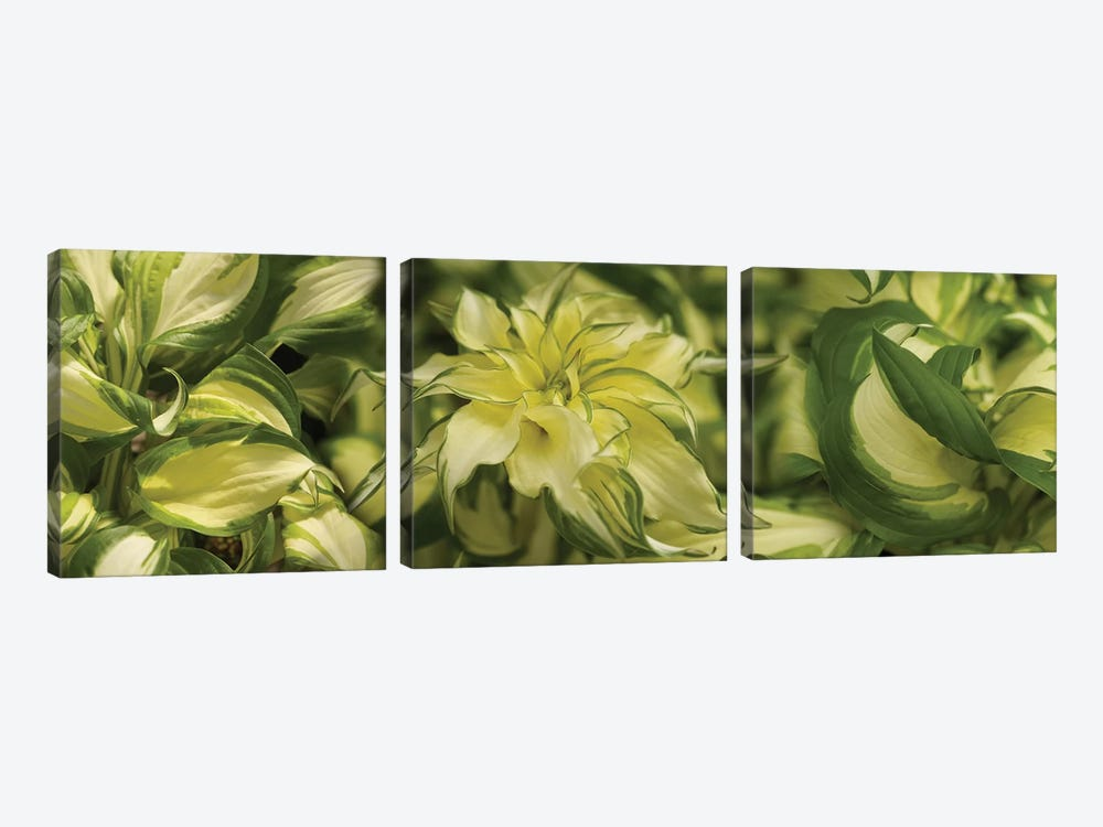 Close-Up Of Coleus Leaves by Panoramic Images 3-piece Art Print