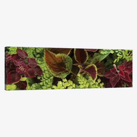 Close-Up Of Coleus Leaves II Canvas Print #PIM14396} by Panoramic Images Canvas Wall Art