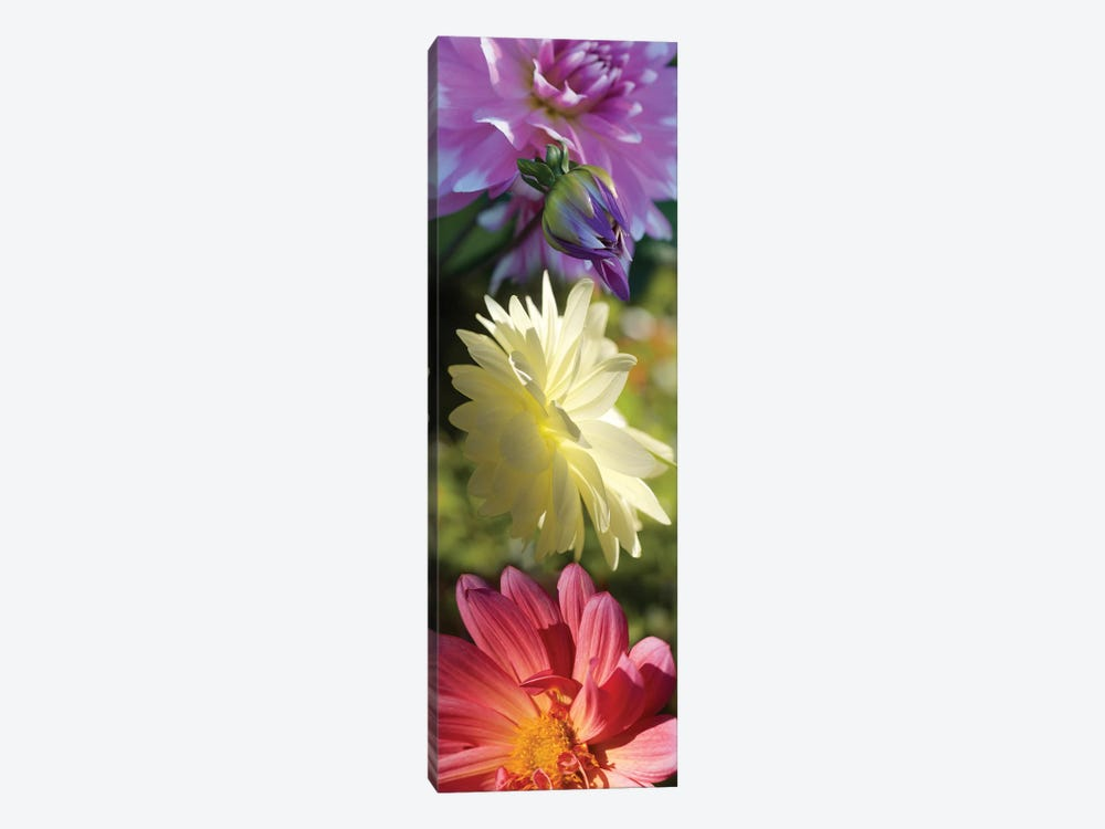 Close-Up Of Colorful Flowers by Panoramic Images 1-piece Canvas Wall Art