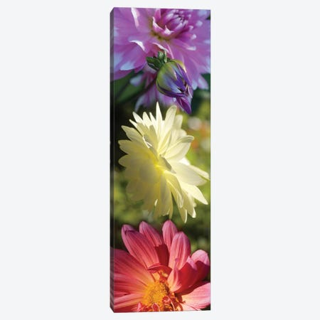 Close-Up Of Colorful Flowers Canvas Print #PIM14399} by Panoramic Images Canvas Art Print