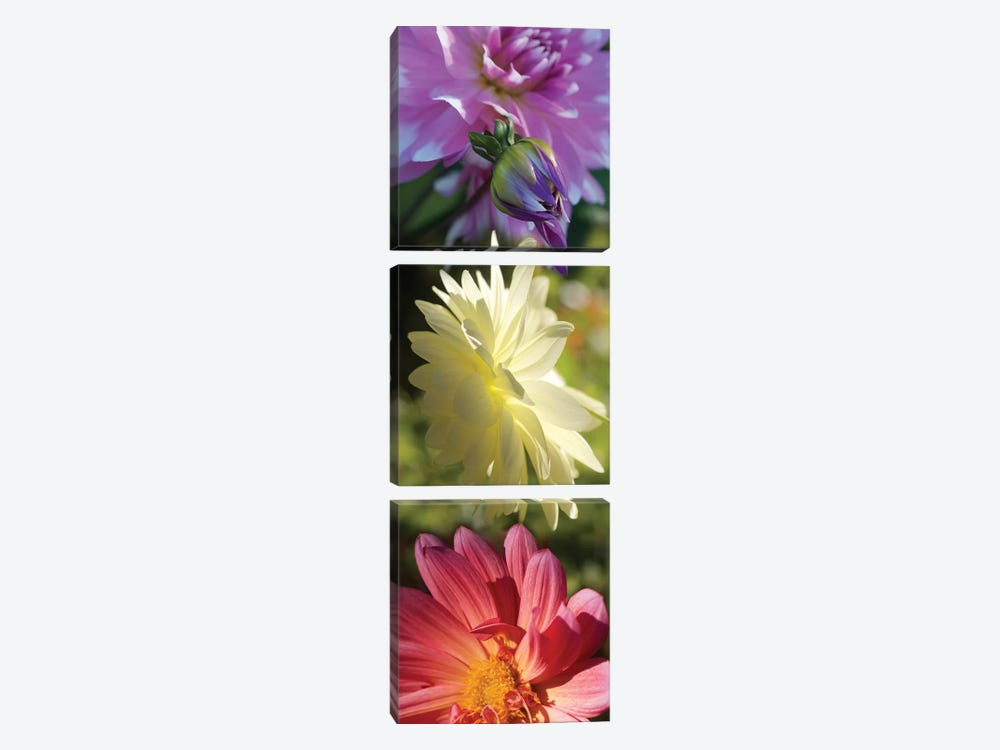Close-Up Of Colorful Flowers by Panoramic Images 3-piece Canvas Art