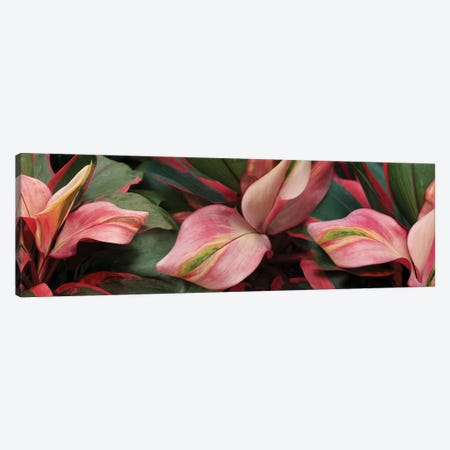Close-Up Of Colorful Leaves Canvas Print #PIM14400} by Panoramic Images Art Print