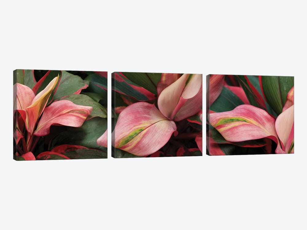Close-Up Of Colorful Leaves by Panoramic Images 3-piece Canvas Print