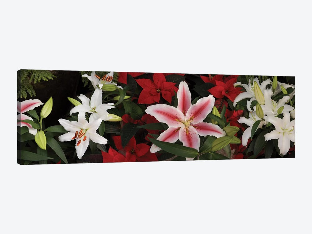 Close-Up Of Colorful Orchid Flowers II by Panoramic Images 1-piece Canvas Art
