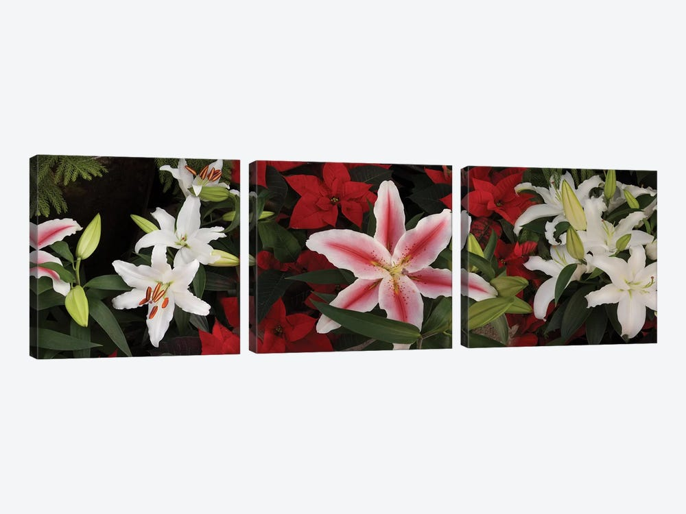 Close-Up Of Colorful Orchid Flowers II by Panoramic Images 3-piece Canvas Art