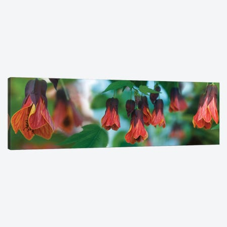 Close-Up Of Conservatory Flower Congregants Canvas Print #PIM14407} by Panoramic Images Canvas Artwork