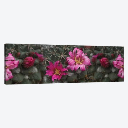 Close-Up Of Contrasting Flower Colors 3-Piece Canvas #PIM14408} by Panoramic Images Art Print