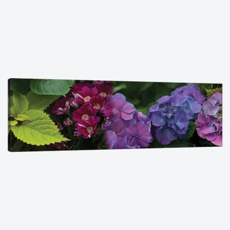 Close-Up Of Daisy And Hydrangeas Flowers Canvas Print #PIM14418} by Panoramic Images Canvas Artwork