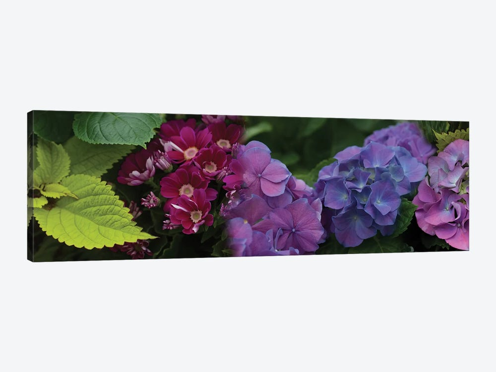 Close-Up Of Daisy And Hydrangeas Flowers by Panoramic Images 1-piece Canvas Artwork