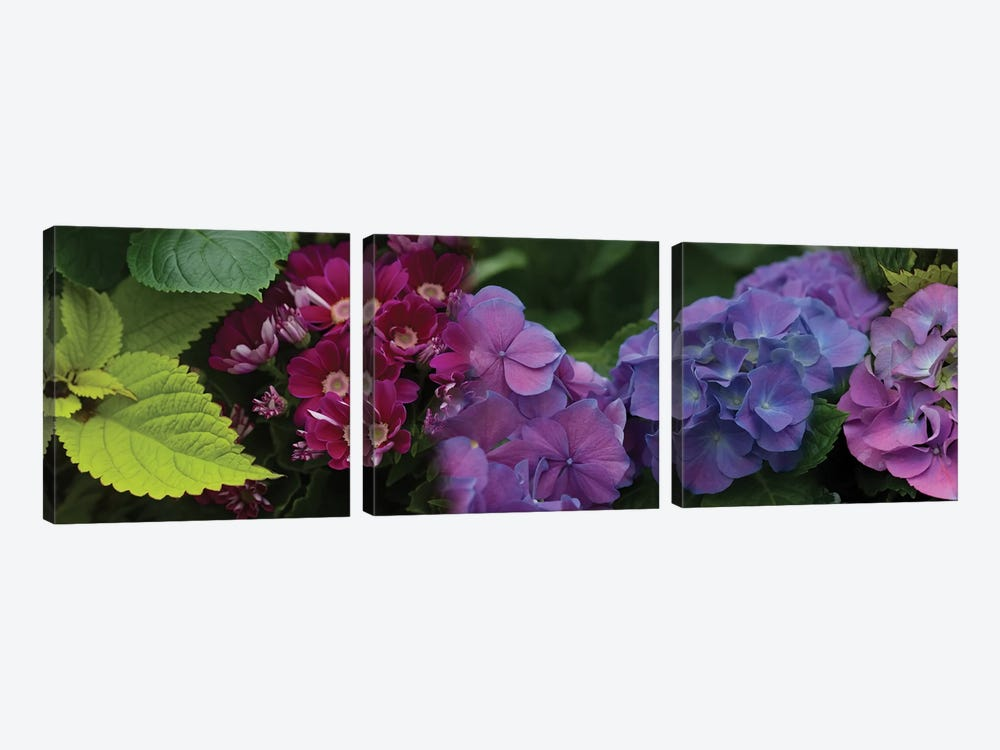 Close-Up Of Daisy And Hydrangeas Flowers by Panoramic Images 3-piece Canvas Artwork