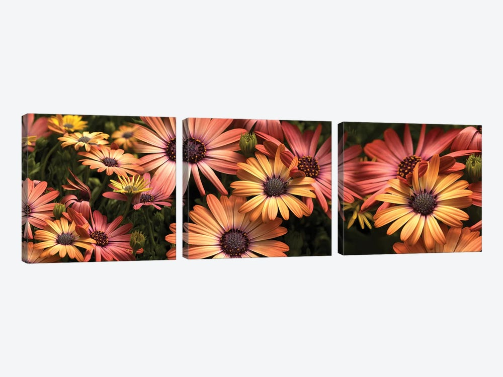 Close-Up Of Daisy Flowers In Bloom I by Panoramic Images 3-piece Art Print