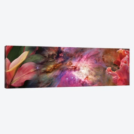 Close-Up Of Detail Of Flower Canvas Print #PIM14421} by Panoramic Images Canvas Art Print