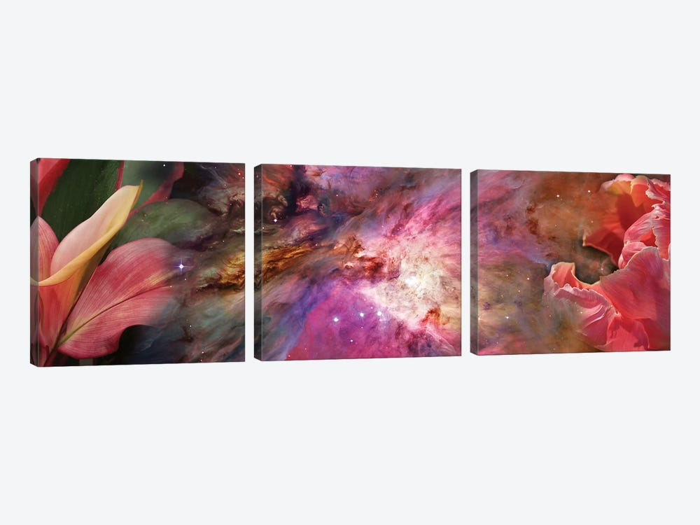 Close-Up Of Detail Of Flower by Panoramic Images 3-piece Canvas Art