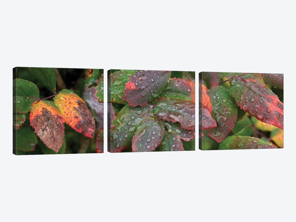 Close-Up Of Fall Colored Leaves by Panoramic Images 3-piece Art Print