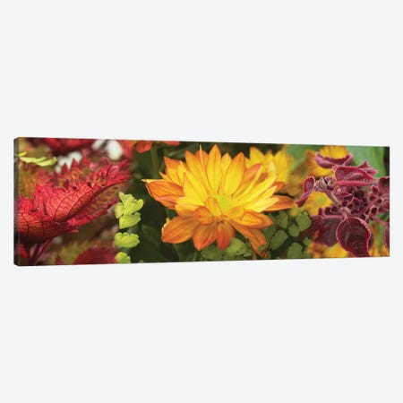 Close-Up Of Fall Flowers Canvas Print #PIM14425} by Panoramic Images Canvas Wall Art