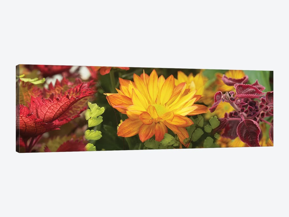 Close-Up Of Fall Flowers by Panoramic Images 1-piece Canvas Art