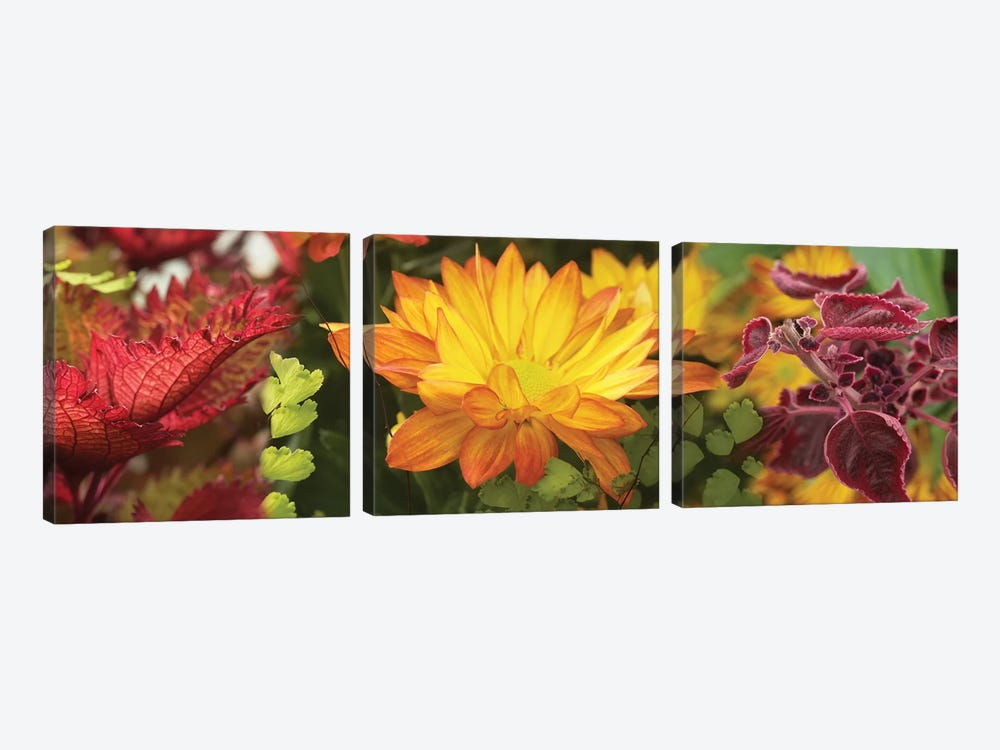 Close-Up Of Fall Flowers by Panoramic Images 3-piece Canvas Artwork