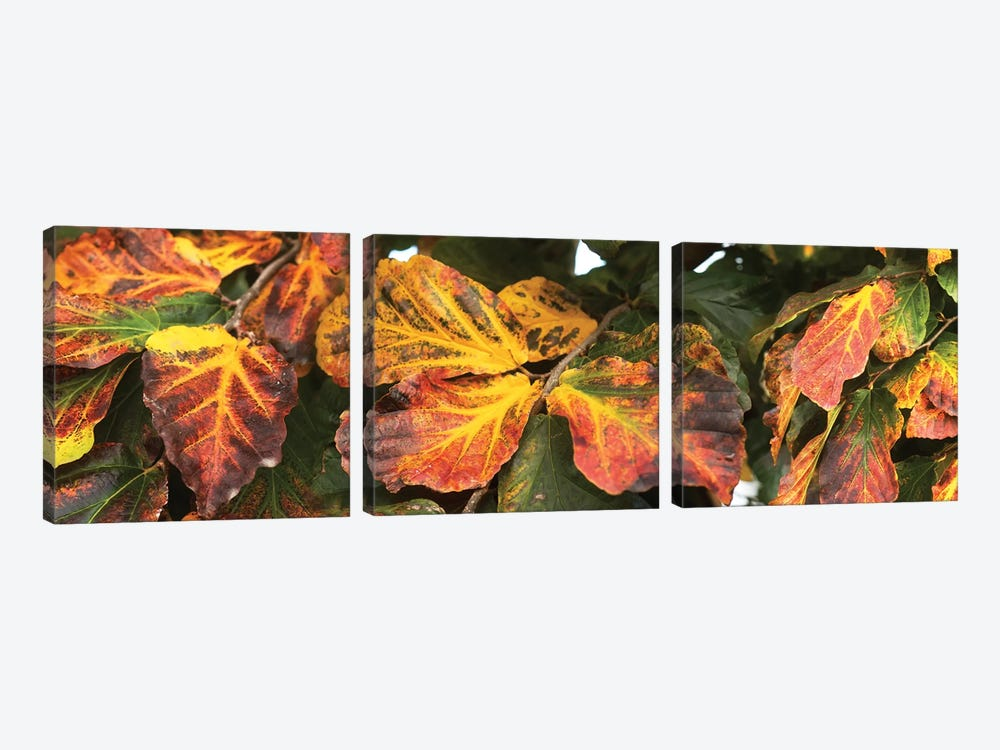 Close-Up Of Fallen Leaves by Panoramic Images 3-piece Canvas Art Print