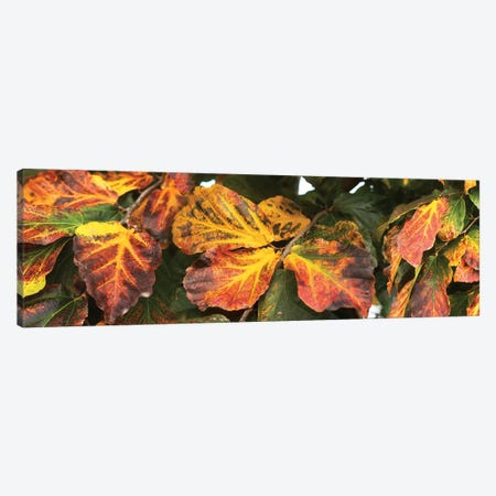Close-Up Of Fallen Leaves 3-Piece Canvas #PIM14426} by Panoramic Images Canvas Wall Art
