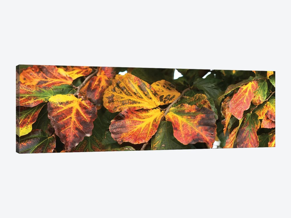 Close-Up Of Fallen Leaves by Panoramic Images 1-piece Canvas Print