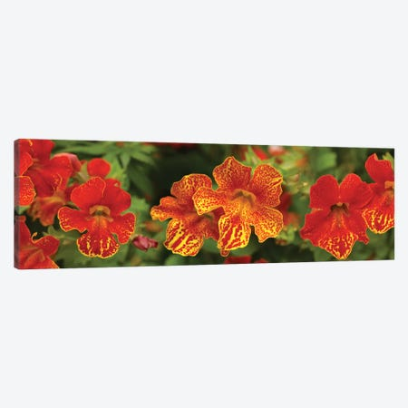 Close-Up Of Flowers Blooming On Plant I Canvas Print #PIM14429} by Panoramic Images Canvas Print