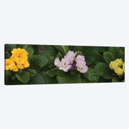 Close-Up Of Flowers Blooming On Plant II Canvas Print #PIM14430} by Panoramic Images Canvas Artwork