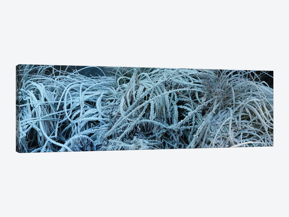 Close-Up Of Frost Covered Grass by Panoramic Images 1-piece Canvas Wall Art
