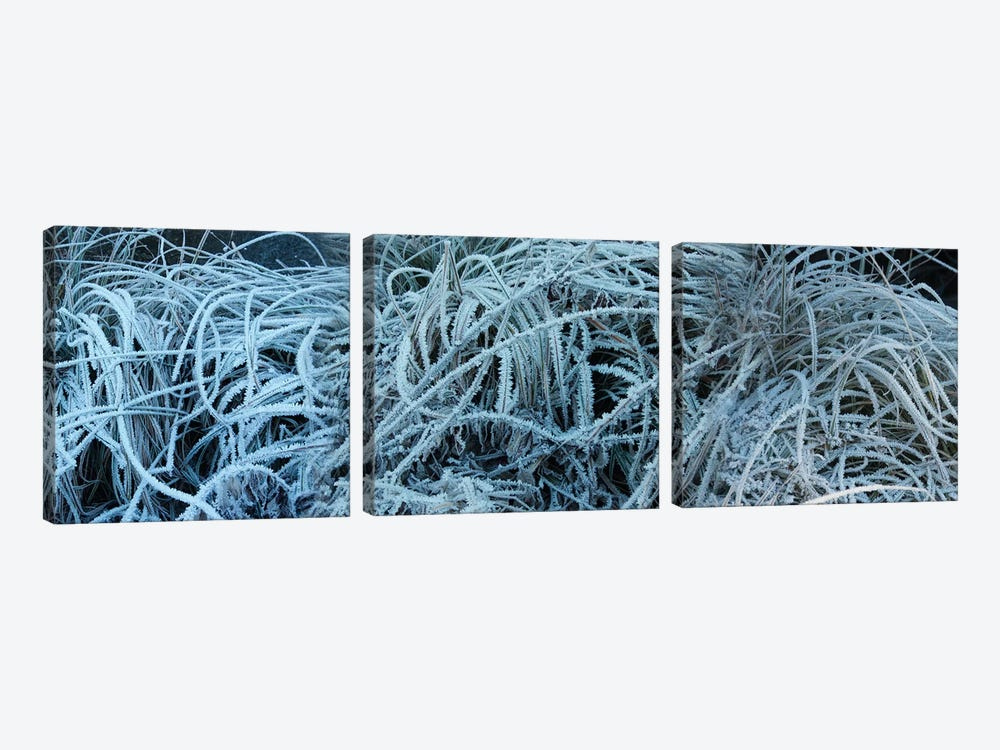 Close-Up Of Frost Covered Grass by Panoramic Images 3-piece Canvas Art