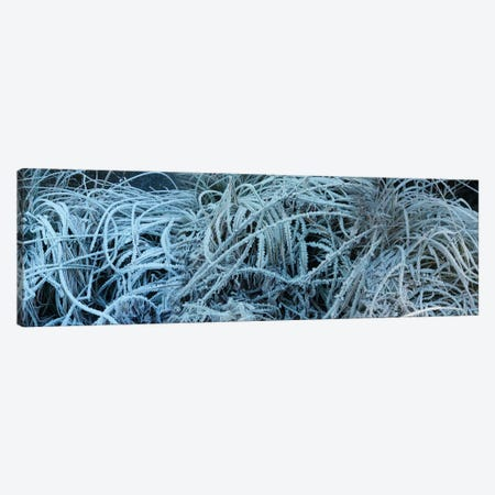 Close-Up Of Frost Covered Grass Canvas Print #PIM14432} by Panoramic Images Canvas Art
