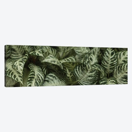 Close-Up Of Green Leaves I Canvas Print #PIM14435} by Panoramic Images Canvas Art Print
