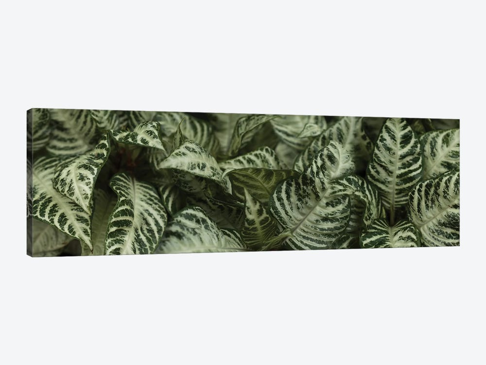 Close-Up Of Green Leaves I by Panoramic Images 1-piece Canvas Print