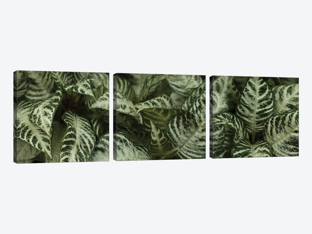 Close-Up Of Green Leaves I by Panoramic Images 3-piece Art Print
