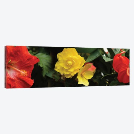 Close-Up Of Hibiscus, Rose And Anthurium Flowers Canvas Print #PIM14438} by Panoramic Images Canvas Art