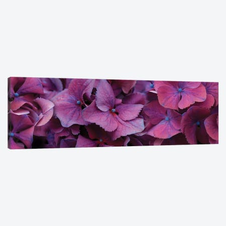 Close-Up Of Hydrangea Flowers I Canvas Print #PIM14440} by Panoramic Images Canvas Art Print