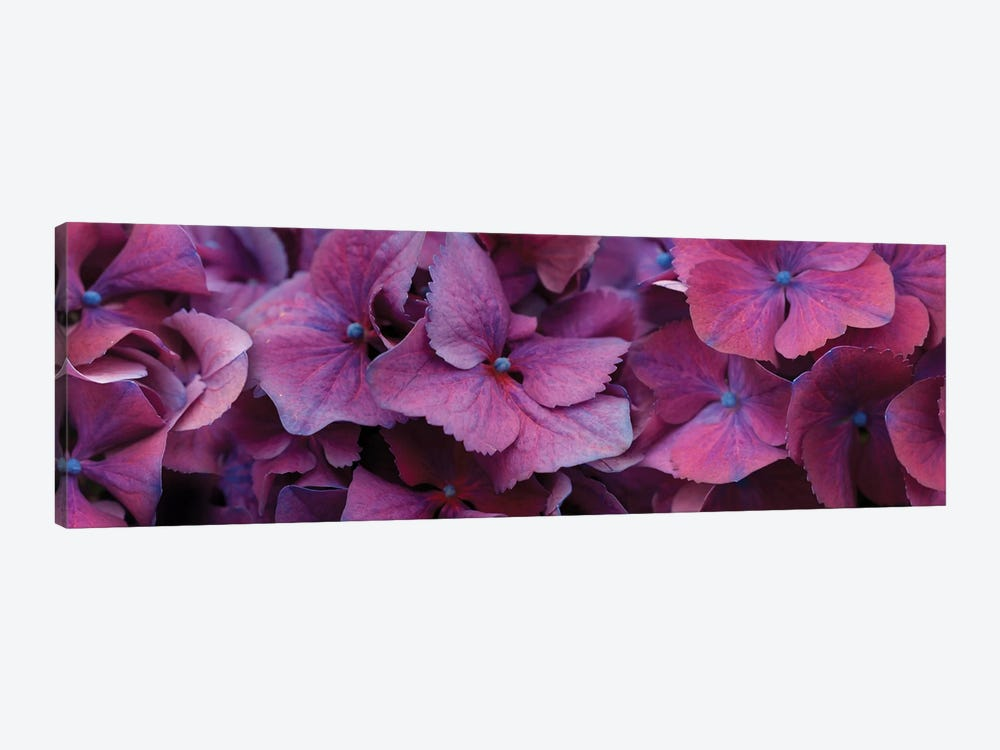 Close-Up Of Hydrangea Flowers I 1-piece Canvas Art Print