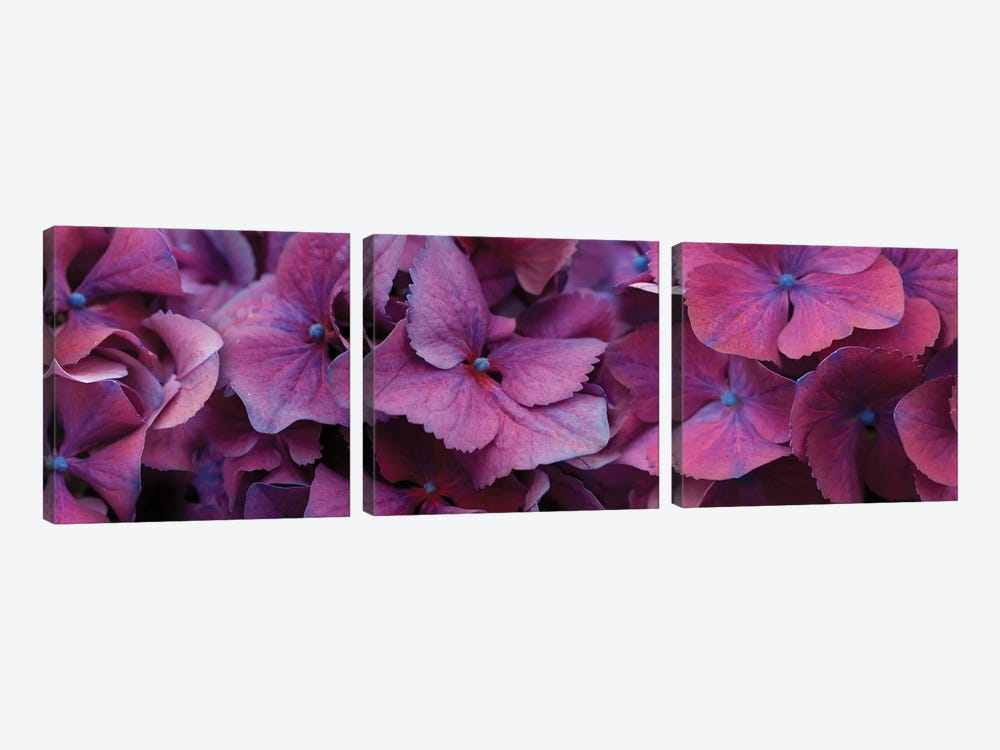 Close-Up Of Hydrangea Flowers I by Panoramic Images 3-piece Art Print