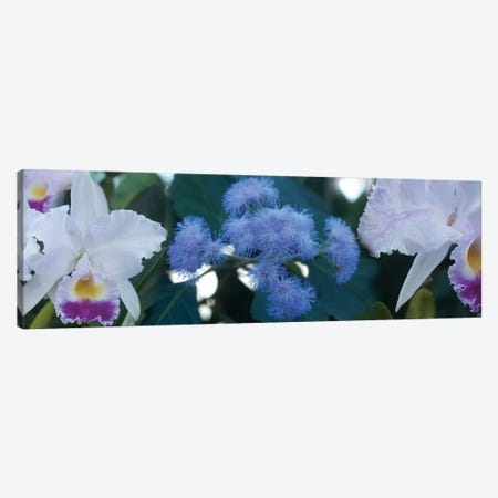 Close-Up Of Iris And Blue Flowers I Canvas Print #PIM14444} by Panoramic Images Canvas Wall Art